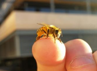 A bee sitting on a hand
