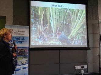 Dr Annelia Khun of the Adopt Moreletaspruit Forum says that there over 300 bird species that exist along the spruit.