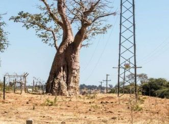 Baobab for which pipeline design was diverted