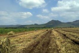 Sugarcane biomass offers hope for embattled Nkomazi farmers