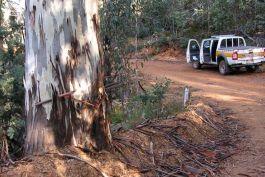 ACT Bushfire Abatement Project